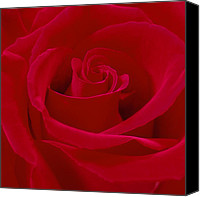 Rose Flower Canvas Prints - Deep Red Rose Canvas Print by Mike McGlothlen