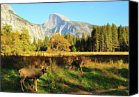 Two Animals Canvas Prints - Deer And Half Dome Canvas Print by Sandy L. Kirkner