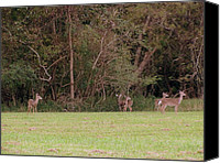 Patrick Mills Canvas Prints - Deer And Meadow II Canvas Print by Patrick Mills