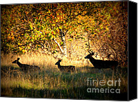 Trees Digital Art Canvas Prints - Deer Family in Sycamore Park Canvas Print by Carol Groenen