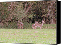 Patrick Mills Canvas Prints - Deer Meadow l Canvas Print by Patrick Mills