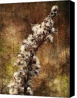 Brown Color Canvas Prints - Delicate Balance of Life Canvas Print by Skip Nall