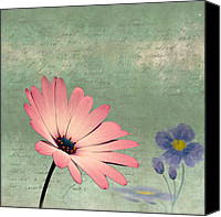 Flower Photograph Canvas Prints - Delicate Flower Canvas Print by Ian Barber