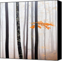 Bulgaria Canvas Prints - Delicate Forest Canvas Print by Evgeni Dinev