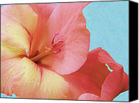 Peach Colored Canvas Prints - Delicate Wonder Canvas Print by Dave Dresser