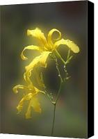 Green Pyrography Canvas Prints - Delicate Yellow Lilies Canvas Print by Linda Phelps