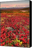 Denali Canvas Prints - Denali National Park Fall Colors Canvas Print by Kevin McNeal