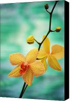 Outdoor Still Life Canvas Prints - Dendrobium Canvas Print by Allan Seiden - Printscapes
