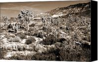 Joshua Trees Canvas Prints - Desert Landing Canvas Print by John Rizzuto