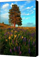 Hillside Canvas Prints - Desert Pines Meadow Canvas Print by Mike  Dawson