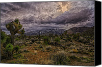 Joshua Trees Canvas Prints - Desert Sunset Canvas Print by Stephen Campbell