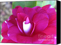 Rose Photo Canvas Prints - Desire Canvas Print by Tina Marie