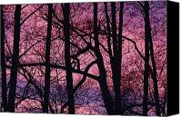 Chromatic Contrasts Canvas Prints - Detail Of Bare Trees Silhouetted Canvas Print by Mattias Klum