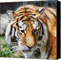 Detroit Tigers Canvas Prints - Detroit Tiger Canvas Print by Michelle Calkins