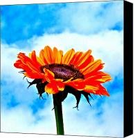Sunflowers Canvas Prints - Devotion Canvas Print by Gwyn Newcombe