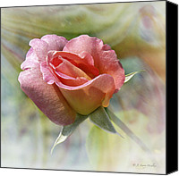 Walker Digital Art Canvas Prints - Dew Drop Pink Rose Canvas Print by J Larry Walker