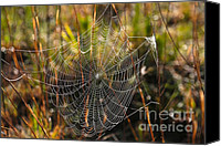 Spider Web Canvas Prints - Dewdrop Web Canvas Print by Carol Groenen