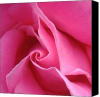 Rose Flower Canvas Prints - Diagonal of Rose Canvas Print by Jacqueline Migell