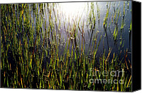 Wetlands Canvas Prints - DIAMONDS in the MARSH Canvas Print by Karen Wiles