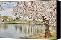 Photo Digital Art Canvas Prints - Digital Liquid - Cherry Blossoms Washington DC 6 Canvas Print by Metro DC Photography