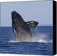 Whale Canvas Prints - Discovering Another Dimension Canvas Print by Tony Beck
