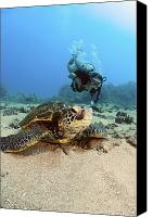 Breathe Canvas Prints - Diver and Green Sea Turtle III Canvas Print by Dave Fleetham - Printscapes