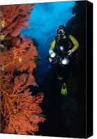Light Suit Photo Canvas Prints - Diver And Sea Fans, Fiji Canvas Print by Todd Winner
