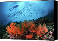 One Piece Swimsuit Canvas Prints - Diver And Soft Corals In Pescador Island Canvas Print by Nature, underwater and art photos. www.Narchuk.com