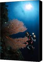 Light Suit Photo Canvas Prints - Diver By Sea Fans, Indonesia Canvas Print by Todd Winner