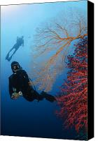 Light Suit Photo Canvas Prints - Divers Swimming By Sea Fans, Indonesia Canvas Print by Todd Winner