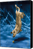 Diving Dog Canvas Prints - Diving Dog 2 Canvas Print by Jill Reger