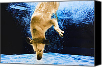Diving Dog Canvas Prints - Diving Dog 3 Canvas Print by Jill Reger
