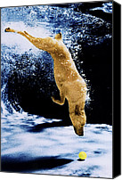 Diving Dog Canvas Prints - Diving Dog Canvas Print by Jill Reger