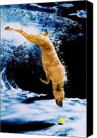 Diving Dog Canvas Prints - Diving Dog Underwater Canvas Print by Jill Reger