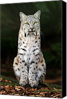 Animals Digital Art Canvas Prints - Divinity Canvas Print by Big Cat Rescue