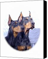 Doberman Prints Canvas Prints - Doberman Pinscher 134 Canvas Print by Larry Matthews