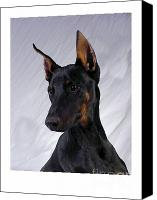 Doberman Prints Canvas Prints - Doberman Pinscher 465 Canvas Print by Larry Matthews