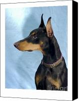 Doberman Prints Canvas Prints - Doberman Pinscher 566 Canvas Print by Larry Matthews