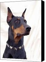 Doberman Prints Canvas Prints - Doberman Pinscher 774 Canvas Print by Larry Matthews