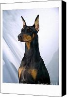 Doberman Prints Canvas Prints - Doberman Pinscher 892 Canvas Print by Larry Matthews