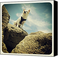 Beach Canvas Prints - #dog #cute #beach #photography #ocean Canvas Print by Mandy Shupp