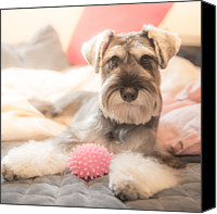Dog Bed Photo Canvas Prints - Dog Looking At Camera Canvas Print by Coolbiere Photograph