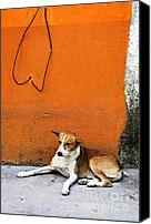 Mutt Canvas Prints - Dog near colorful wall in Mexican village Canvas Print by Elena Elisseeva