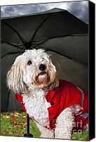 Red Clothing Canvas Prints - Dog under umbrella Canvas Print by Elena Elisseeva