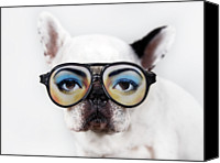 French Bulldog Canvas Prints - Dog Wear Glasses Canvas Print by Retales Botijero