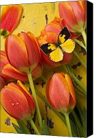 Flower Canvas Prints - Dogface butterfly and tulips Canvas Print by Garry Gay