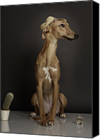 Whippet Canvas Prints - Dogs Canvas Print by Rainer Elstermann