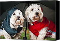 Red Clothing Canvas Prints - Dogs under umbrella Canvas Print by Elena Elisseeva
