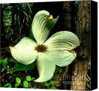 Indiana Dogwood Trees Canvas Prints - Dogwood Blossom I Canvas Print by Julie Dant