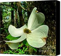 Indiana Dogwood Trees Canvas Prints - Dogwood Blossom II Canvas Print by Julie Dant